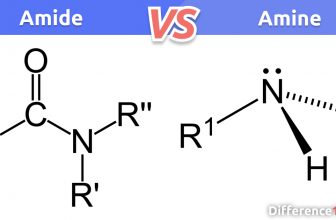Amide vs Amine: 6 Key Differences, Similarities, Pros & Cons